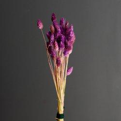 Suszone kwiatki - Kanar...