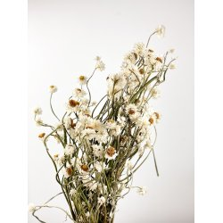 Suszone kwiatki - Pęczek