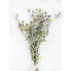 Kwiaty suszone - Mikołajek...
