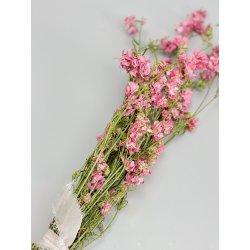 Kwiaty suszone - Ostróżka -...