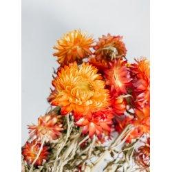 Kwiatki suszone - Kocanka -...