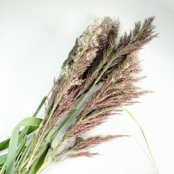 Trawa ozdobna - pęczek