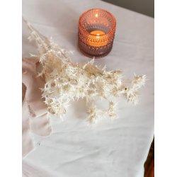 Suszone kwiaty Oset bielony...