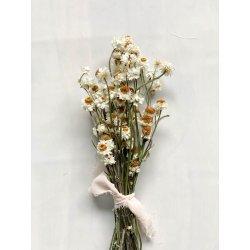 Suszone kwiaty Kocanka...