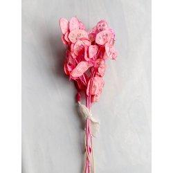 Suszone kwiaty Lunaria Różowa