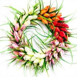 Wianek z tulipanów Hello...